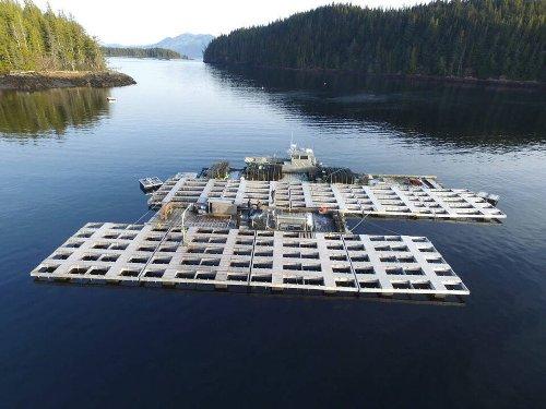 Shellfish and seaweed mariculture is focus of new Alaska industry alliance