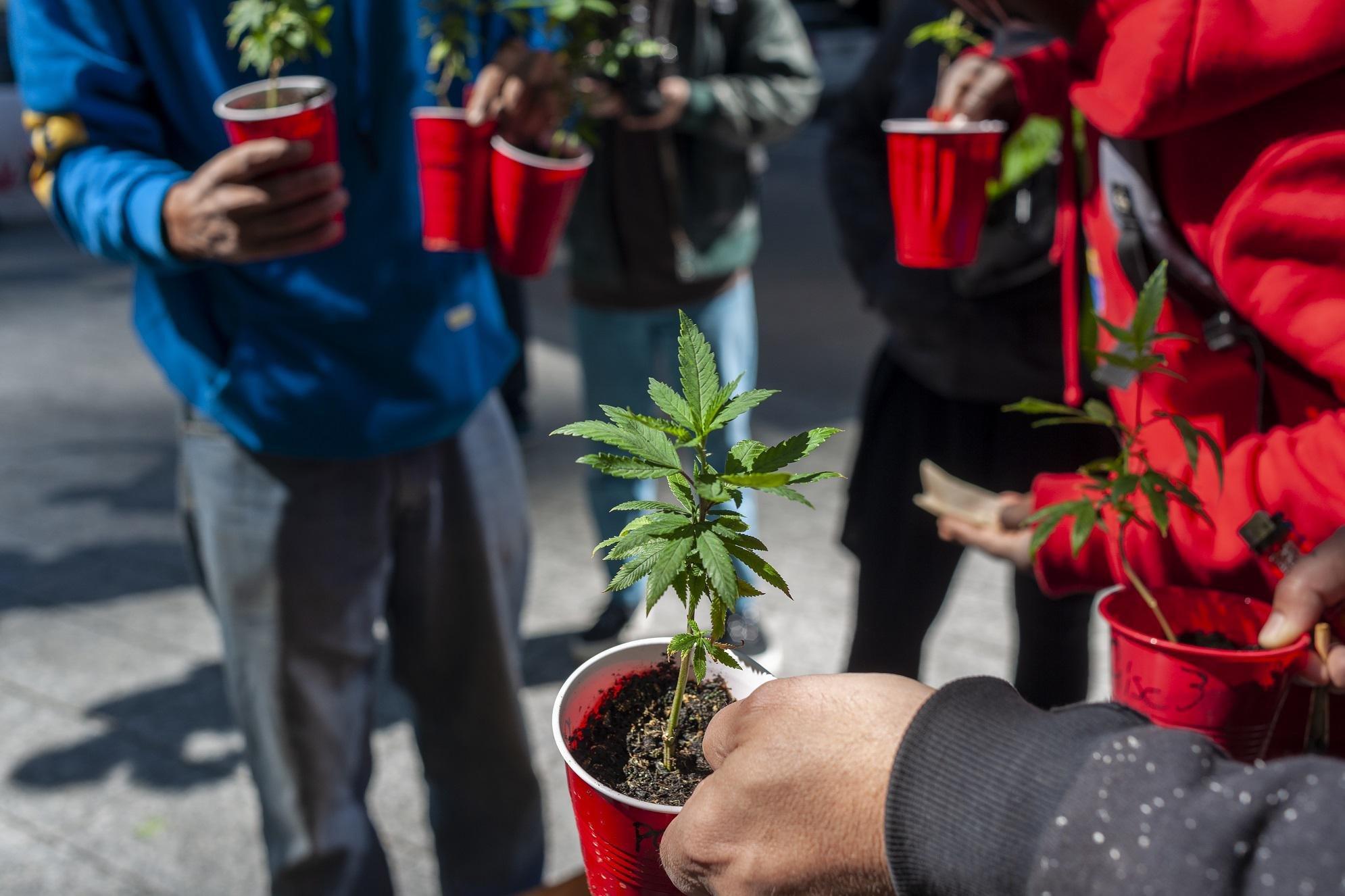Cannabis, al via il referendum per la depenalizzazione