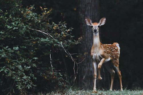 A Letter From Your Friendly Neighborhood Deer