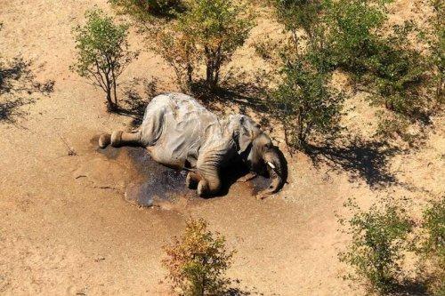 WHO KILLED THE ELEPHANTS IN BOTSWANA | THE ADVENTURE BLOG