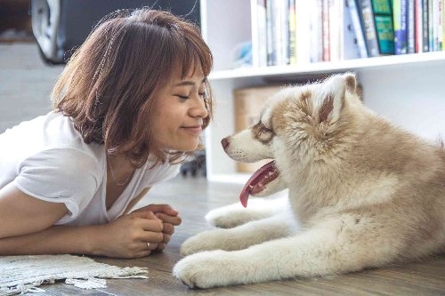 How to Get a Therapy Dog | Aha!NOW