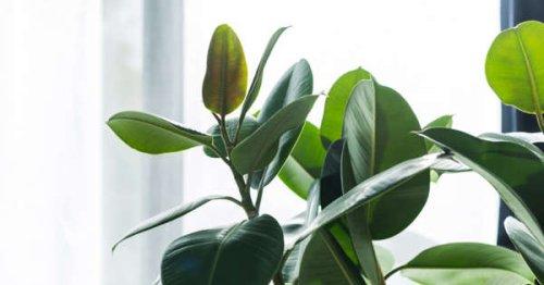 20 starter houseplants anyone can keep alive