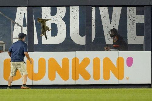 Watch as a cat runs wild in Yankee Stadium, delays Orioles game