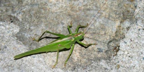 Israeli Locust Slayers Train Ethiopians to Save Crops