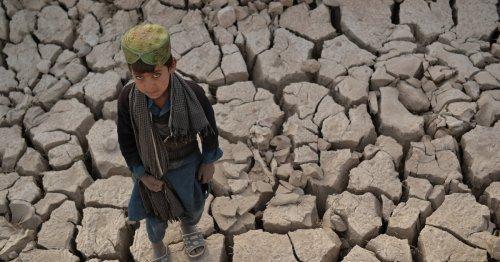 'Climate catastrophe': World faces 2.7C temperature rise
