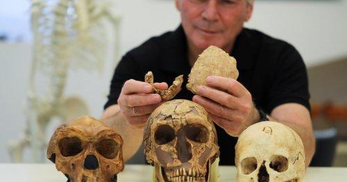 Researchers find 'new type of early human' near Israel's Ramla