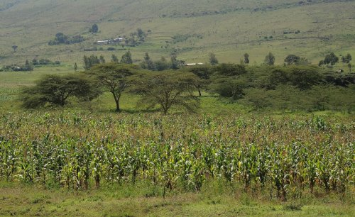 Kenya: What the Budget Holds for the Agriculture Sector in Kenya