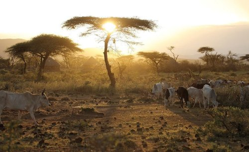 Africa: Don't Be Fooled, the Biodiversity Crisis Is a Global Security Crisis