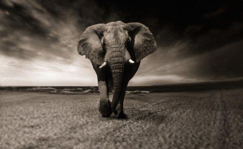 Tanzania: Elephant, Buffalo Populations On the Rise in Serengeti National Park