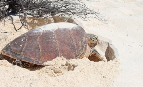 Kenya: Alarm as Dead Turtles Wash Up on Tana's Kipini Beach