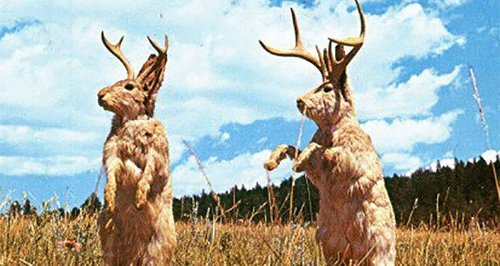 How The Jackalope Became One Of America's Favorite Cryptids