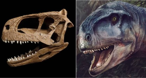 Scientists Are Calling This Newly-Discovered Cousin Of T. Rex 'The One Who Causes Fear'