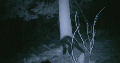 'I Know What I Saw': 8 Alleged Encounters With Bigfoot That'll Give You Chills