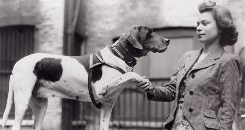 How An Ordinary English Pointer Became A Decorated World War II Soldier