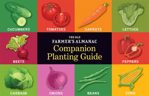 Companion Planting Guide for Vegetables