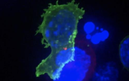 »Veränderung eines Nukleosids der mRNA führt zur Zerstörung der angeborenen Immunantwort« - Alschner.Klartext