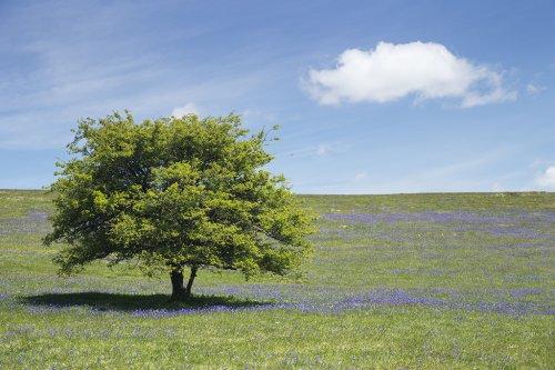 Creative landscape composition - Amateur Photographer