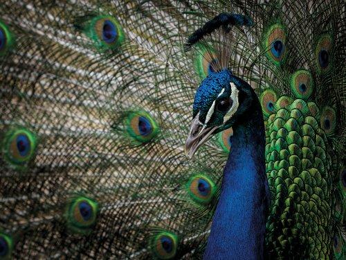 Improve your focus skills for sharper images - Amateur Photographer