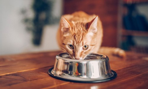 Cat food recalled over potential link to serious illness – Which? News