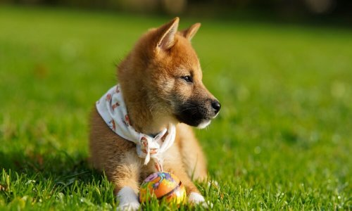 Can 'newfound respect' for Shiba Inu help it cross $1