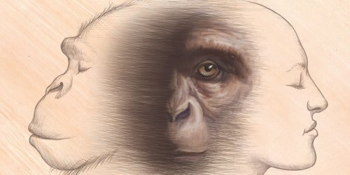 Studying Fossil Apes Key to Human Evolution Research | AMNH