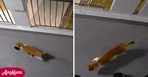 Cat Steals One Slipper from the Neighbor's Doorstep 4 Times