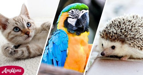 Each Zodiac Sign Has a Best Pet Match — From Hedgehogs to Puppies