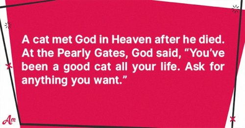 Daily Joke: A Cat Went to Heaven after Being Good All His Life