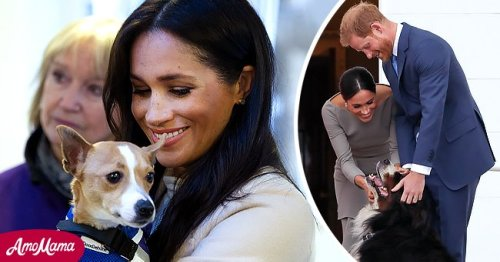 Meghan Markle's Love of Dogs in 2015 Made an Ordinary Shelter Dog a Member of the Royal Family