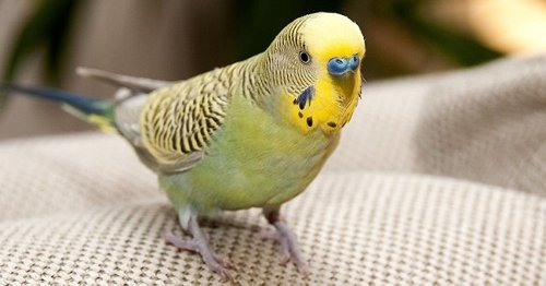 Daily Joke: Man Deals with His Pet Parrot's Bad Behavior