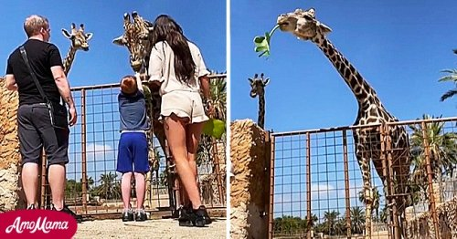 Panicking Adults Save Boy from a Giraffe after It Lifts Him into the Air & The Video Goes Viral
