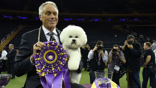 Westminster Dog Show 2021 live breed results, winners for every group & Best in Show