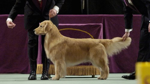 What channel is the Westminster Dog Show on today? Time, TV schedule for 2021 competition
