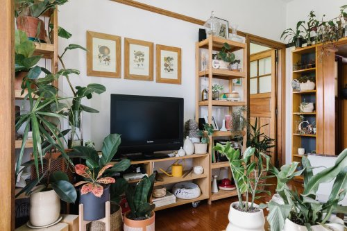 These Plants Will Kill Your Fungus Gnat Problem