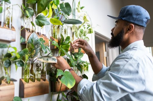 Learn How To Propagate Plants From This Popular Online Class
