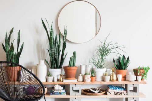 8 Houseplants You Can Move Outside Now That It's Warm