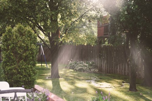 The 7 Trees You Should Never Plant in Your Yard, According to Real Estate Pros