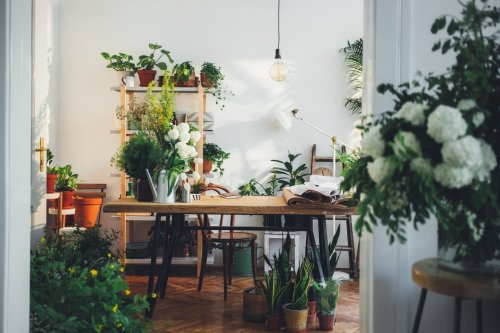 What to Do if Your Plants Hate Your New Apartment