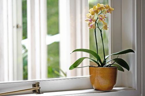 8 Easy Tips to Turn You from an Orchid Killer to an Orchid Master