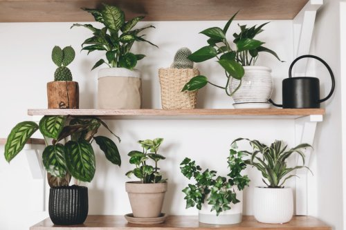 This Is Going to be the Most Popular Designer Houseplant Until 2023, According to the Plant Doctor