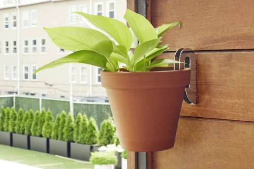 Floating Plant Hangers Will Create a Space-Saving Oasis in Your Home