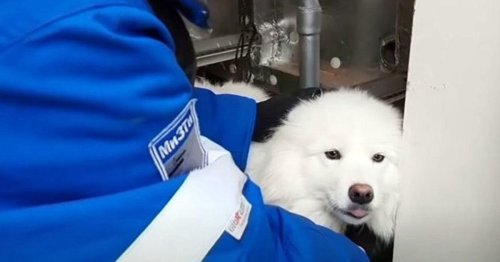 Dog Rescued After Wandering Along Arctic Ice For More Than A Week