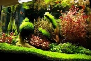Java Moss Care Guide