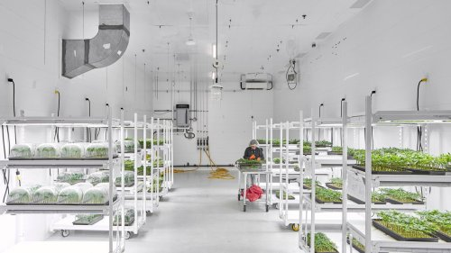 Step Inside America's Most Unusual Marijuana Farms