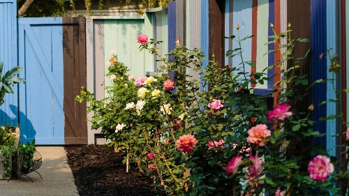 It's Time to Start Planning Your Dream Rose Garden