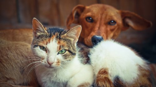 112 dogs, cats rescued from unsanitary conditions in Maryland town