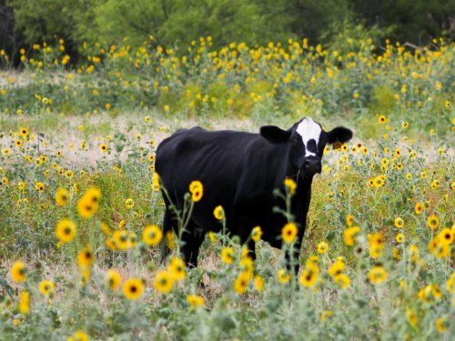 Driving Routes for Texas Wildlowers