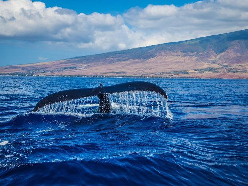 Where to Go Whale Watching