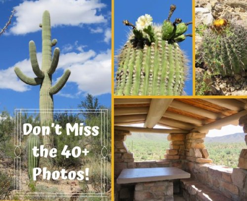 2 Saguaro National Park Districts in 1 Incredible Itinerary