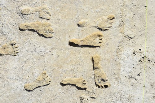 23,000-year-old footprints suggest people reached the Americas early